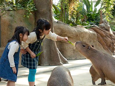 神戸動物王国