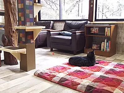 保護犬&猫カフェ しっぽの森